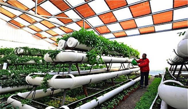 La última moda en China: invernaderos con energía solar