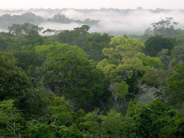 El papel de la selva amazónica en el ciclo global del carbono