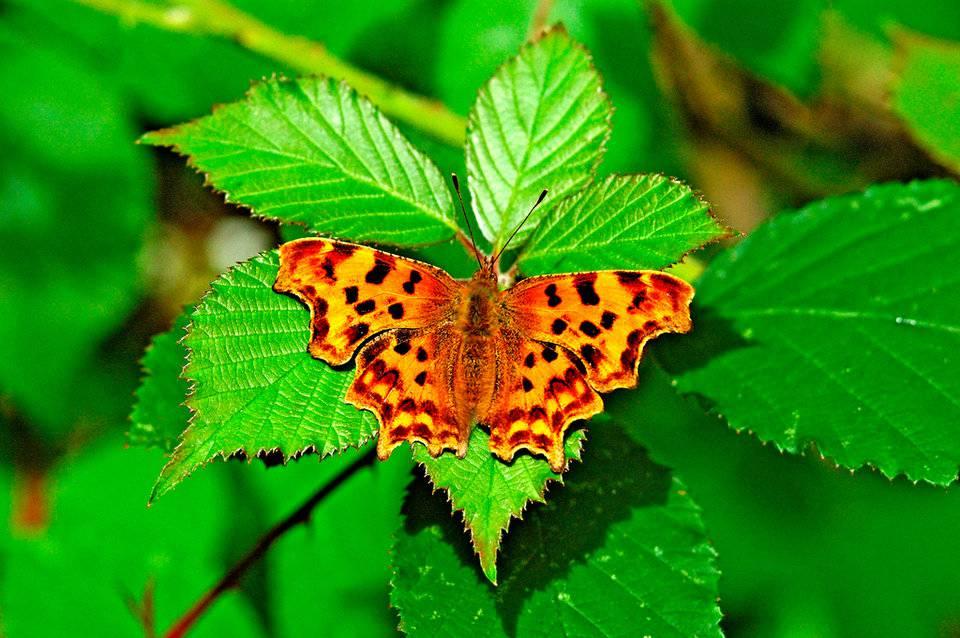 Mariposas y cambio climático